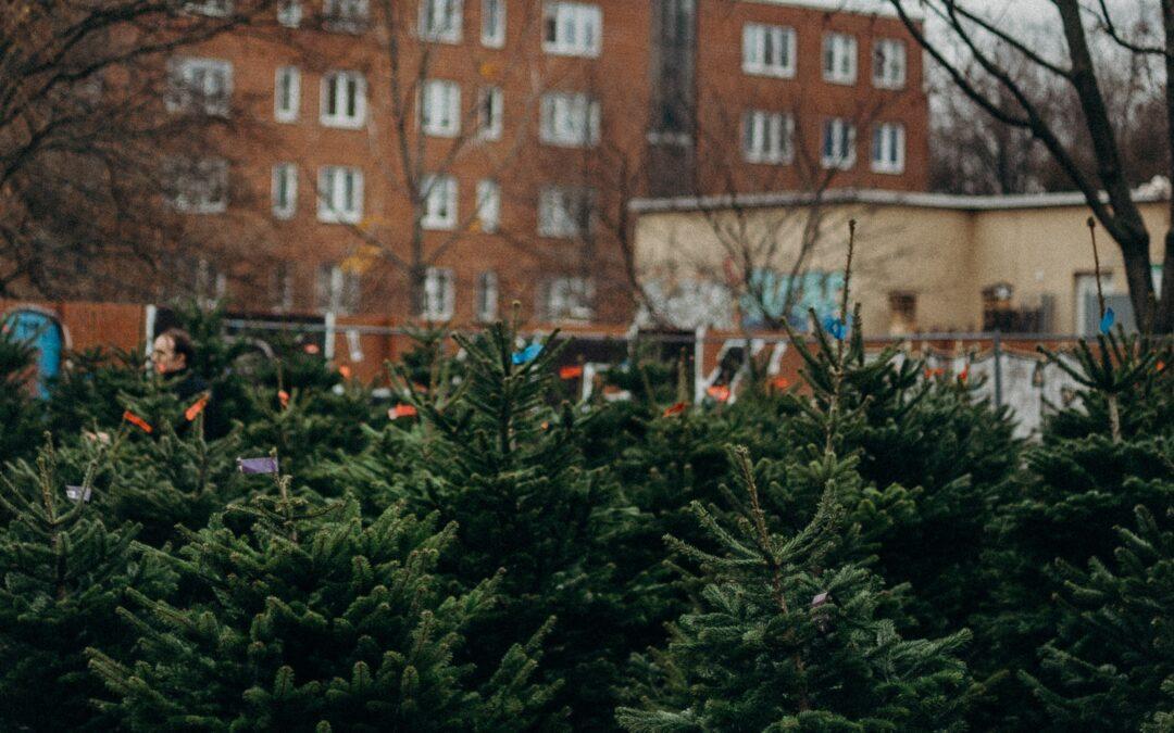 Mítoszok a karácsonyfa frissen tartásáról